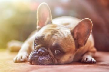 Huntercph.dk  - hundeudstyr i høj kvalitet