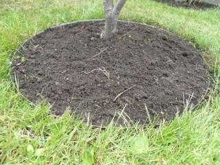Få flotte lige kanter i græsset med en græskant
