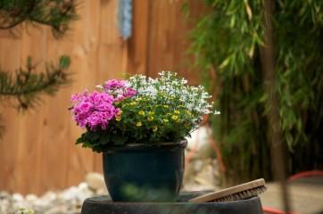 Indret dit hjem hyggeligt og smuk med blomster i flotte urtepotter