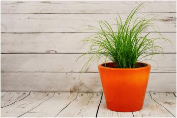 Naturtro, kunstige gulvplanter til et dejligt indemiljø