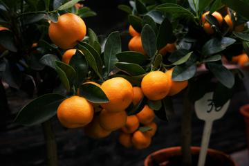 Skab en sundere arbejdsplads med frisk frugt fra Firma-frugt.dk